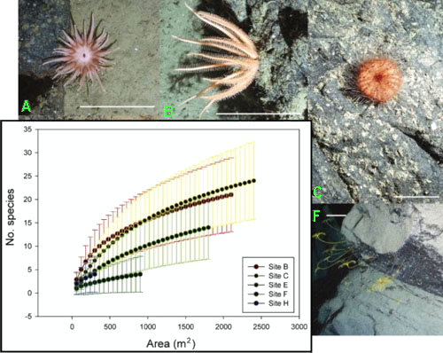 A few species from Nazaré Canyon, offshore Portugal: A) actinarian anemone, B) brisingid sea star, C) echinoid Calveriosoma hystrix, F) stalked crinoid Anachalypsocrinus nefertiti. Scale: 10cm. Inset: estimating biodiversity with sample-based rarefaction curves, illustrating the species density at the upper (Sites B, C, E), middle (Site F) and lower canyon (Site H). Data from Pattenden A. in Huvenne et al. (in press).