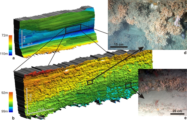 Example of sideways multibeam mapping: morphology of a coral-covered, overhanging cliff in Whittard Canyon, mapped with a SM2000 multibeam placed on the front of the ROV ISIS (left). Top: (a) data collected at 30m distance, 50cm pixel size; (b) data collected at 7m distance, 10cm pixel. No vertical exaggeration.